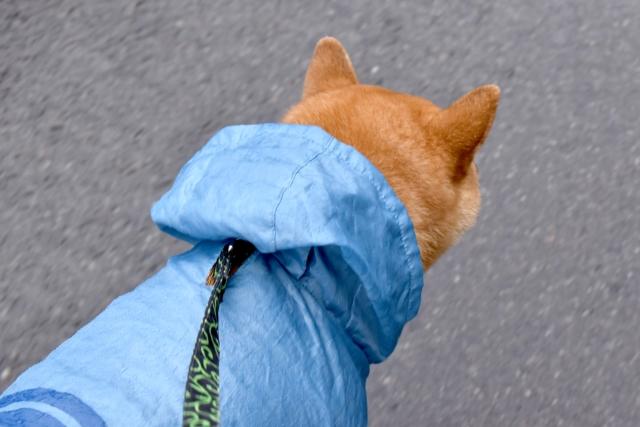 雨の時はカッパが必要?
