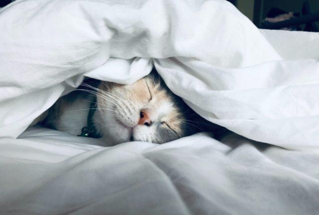 早く寝る!